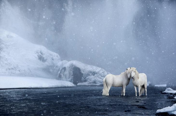 loshadi-Islandii-fotograf-Dryu-Doggett 18