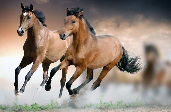 Ахалтекинская лошадь. Красота созданная природой. Самые красивые животные планеты. Фото с сайта NewPix.ru