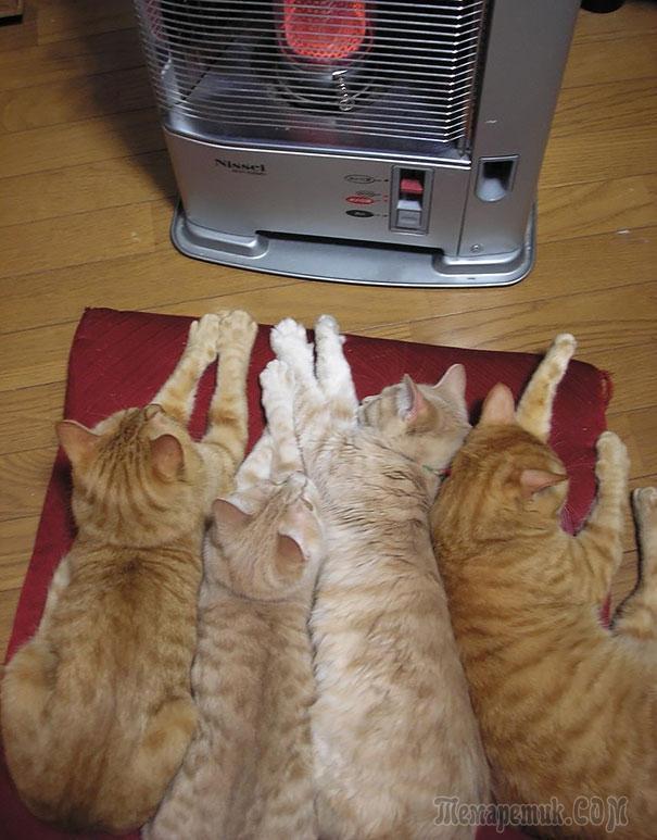 20 кошек, которые любят тепло больше, чем кто-либо