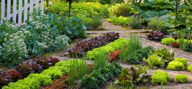 10 творческих идей для мини-огородов