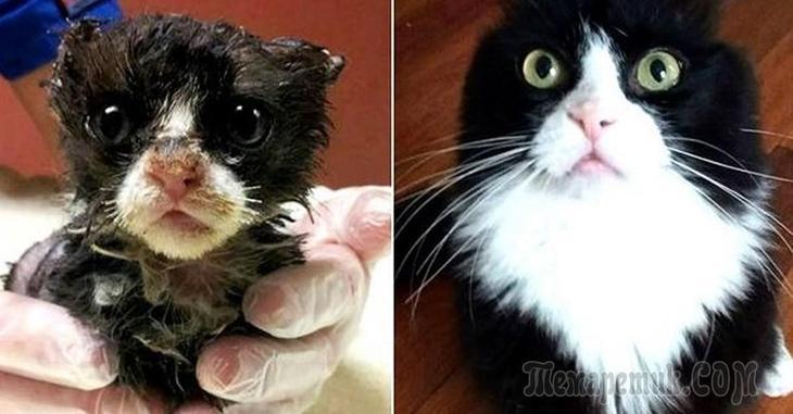 Фотографии кошек после того, как их подобрали с улицы