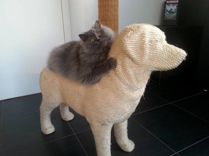 Кошачий антистресс - когтеточка-собака