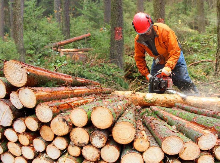 Какой штраф за незаконную вырубку леса