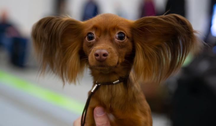 Породы собак с фотографиями и названиями: маленькие, средние ...