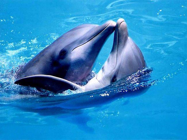 Досье на дельфина