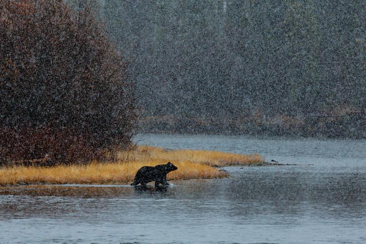 Медведь loverme