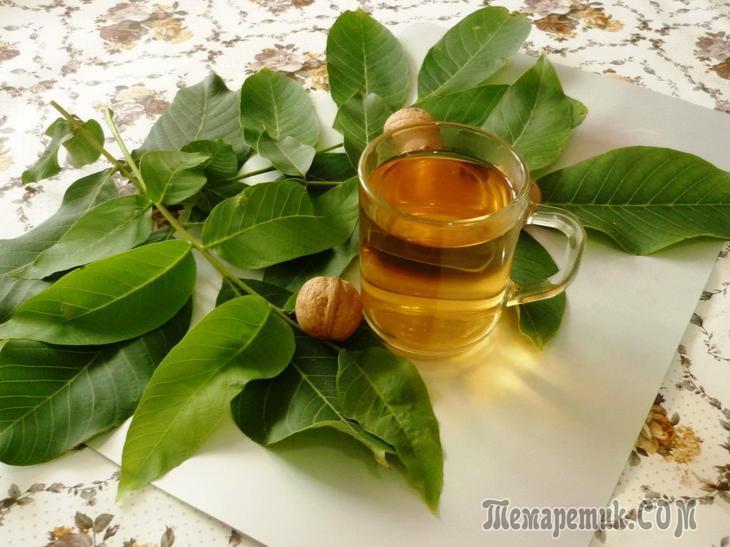 Настойка зеленого грецкого ореха – применение снадобья Видео