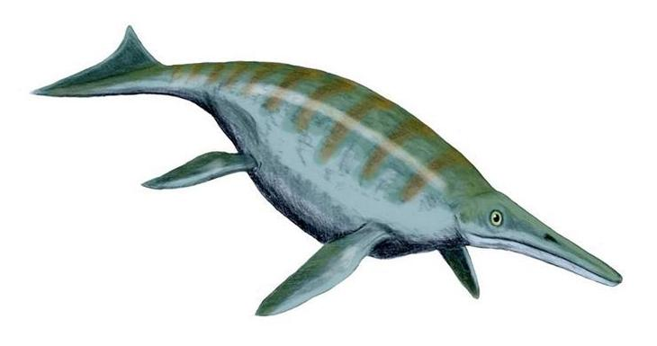 Шонизавр