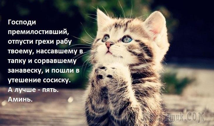 Котэ как люди, предлагается улыбнуться :-)