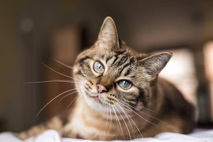 Приметы о кошках: предсказывают будущее, лечат и предупреждают о бедах