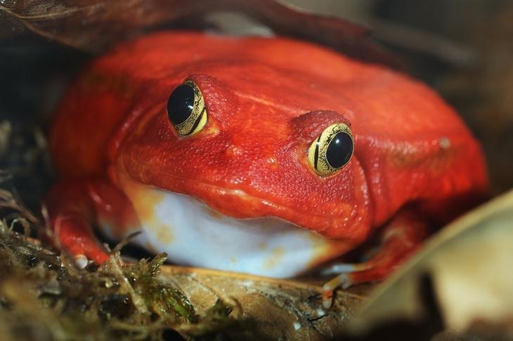 Красный узкорот животные, красные животные, природа, цвет