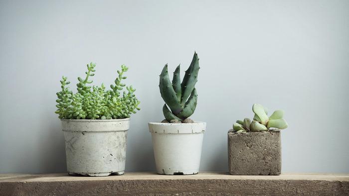 7 растений, с которыми можно забыть о поливе