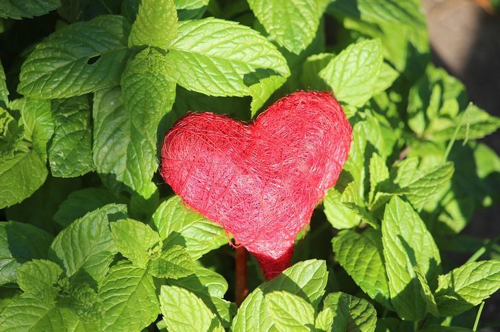 Сердце Красный Связность - Бесплатное фото на Pixabay