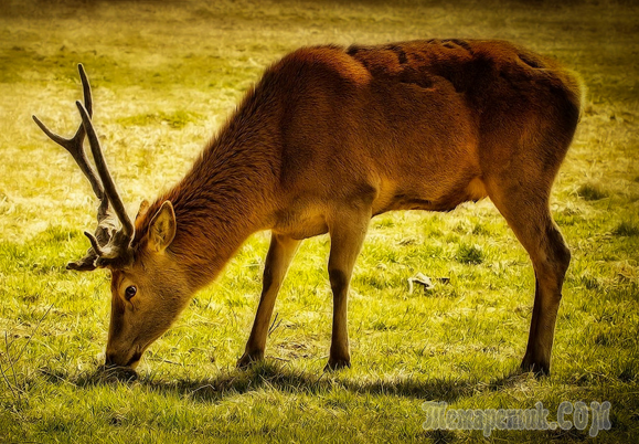 Лучшие фотографии живой природы от фотографа Ray Bilcliff