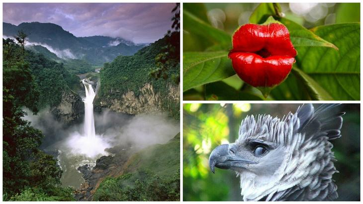 Дикая природа Амазонки (18 фото)
