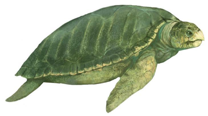 Вымершие виды гигантских черепах