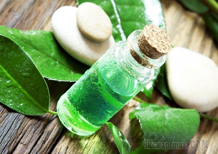 Свойства и применение масла чайного дерева