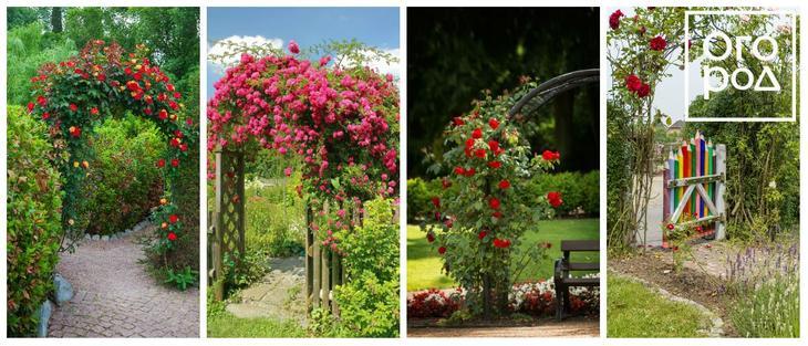 Арки с розами