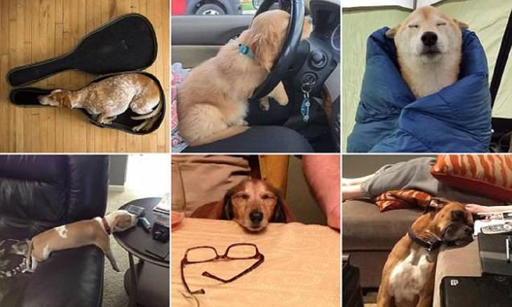 Самые невероятные места, в которых могут заснуть собаки животные, мило, собаки, фото