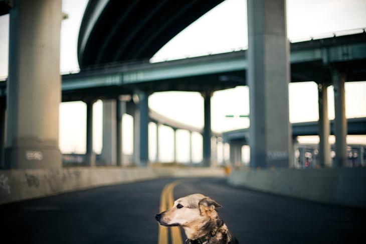 Фотографии собак - 21