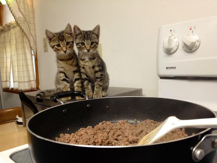 Сложно представить приготовление еды без четвероногого любимца животные, интересное, кошки