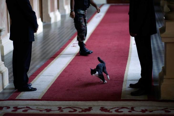 Кошка появляется в доме правительства Парагвая во время ожидания высокопоставленного гостя Забавные фото, животные, мимишность