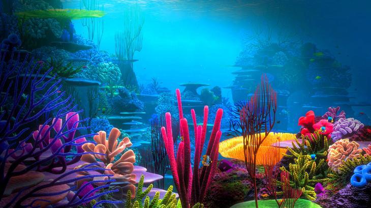 NewPix.ru - Мир кораллов