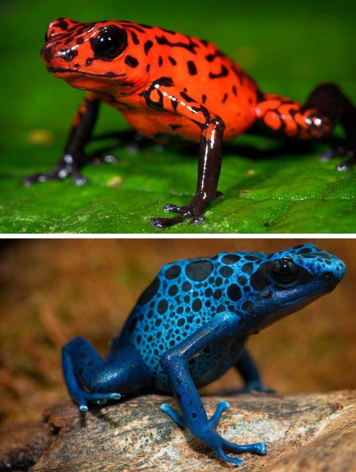 Древолаз. Красота созданная природой. Самые красивые животные планеты. Фото с сайта NewPix.ru
