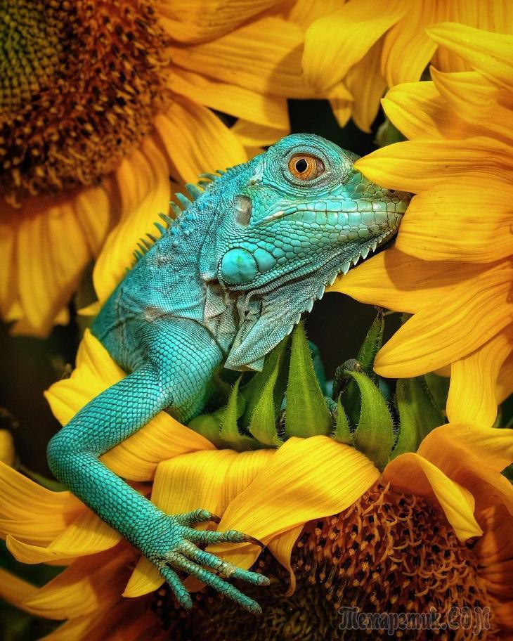 Лучшие фотографии с конкурса #Animals202