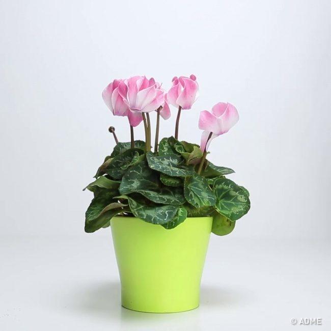 Как вернуть к жизни погибающее растение