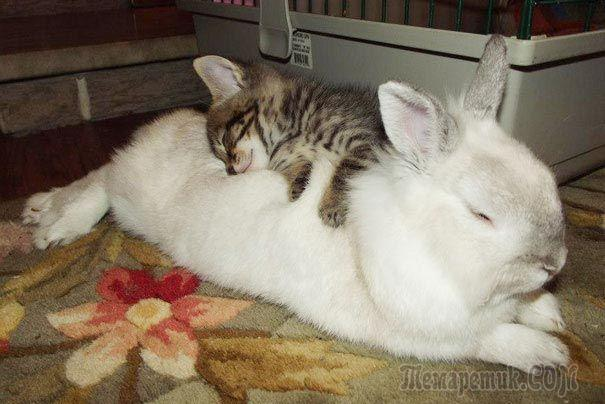 Спящие приятели, которые едва ли подружились бы в обычной жизни