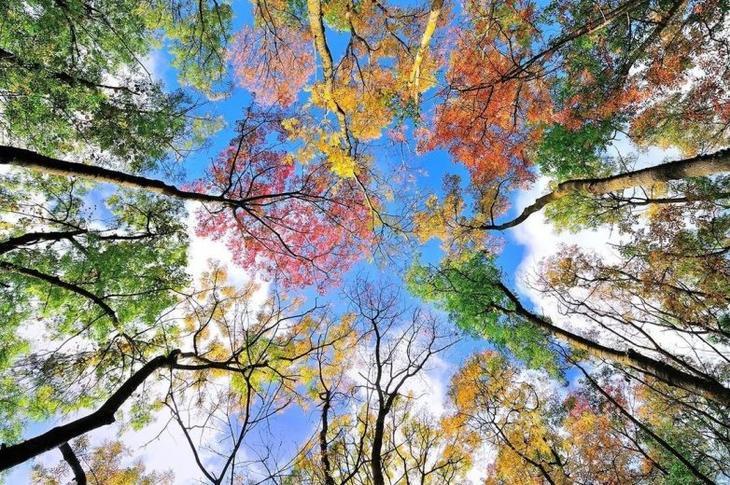 Золото осени: подборка атмосфернейших фото о лучшем времени года