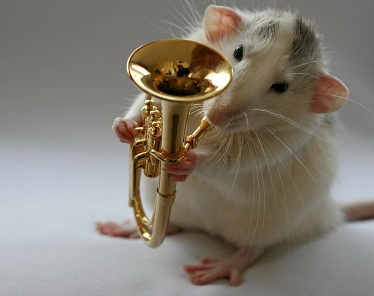 Крыса играет на трубе. Эллен ван Дилен. Фото