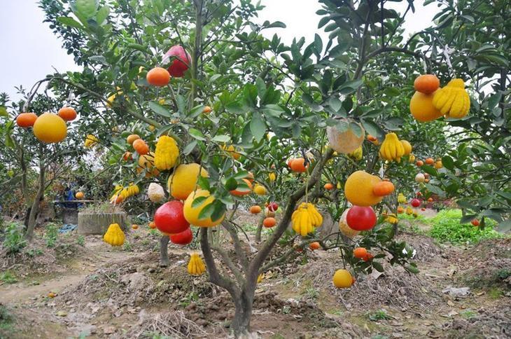Деревья Франкенштейна Фабрика идей, дерево-сад, интересное, растения, садоводство, факты