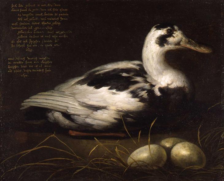 Утка -- 1647-50, 35х41, Музей Дордрехт