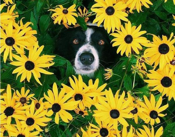 Найти собаку на картинках