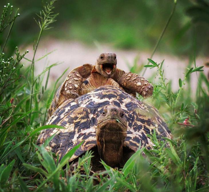 Смешные фотографии диких животных 33