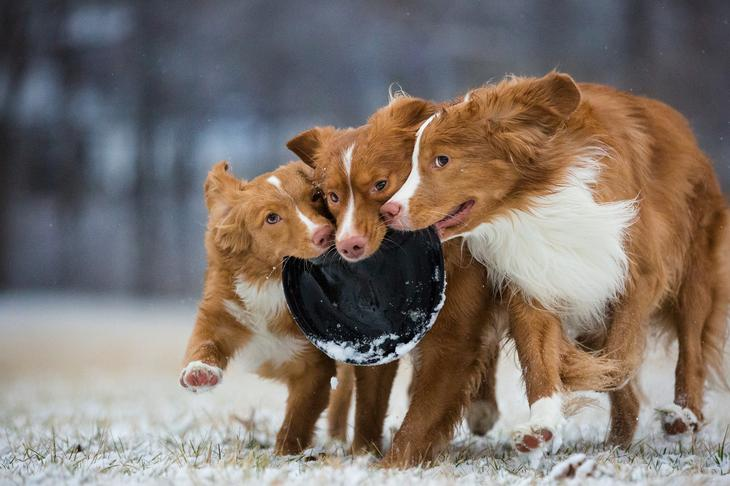 Победители фотоконкурса Dog Photographer of the Year 2018 5