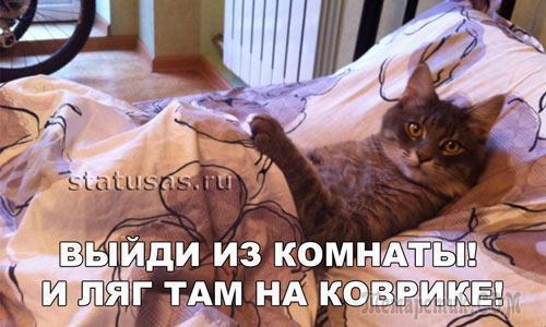 Поговори  с котом о пустяках