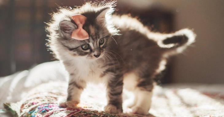 Американка спасла животное, которое приняла за кота. Как же она ошиблась