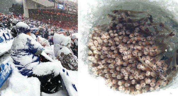 Вот что такое — настоящая зима: 30+ фотографий, от которых вам станет холодно