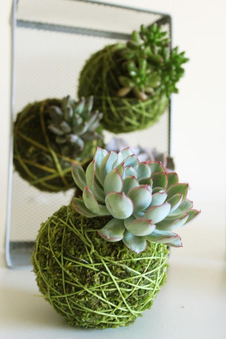 Кокедама: мастер-класс с фото, как сделать шары из мха для орхидей, суккулентов, цитрусовых и других растений  своими руками