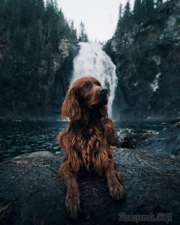 Собачье путешествие по Норвегии