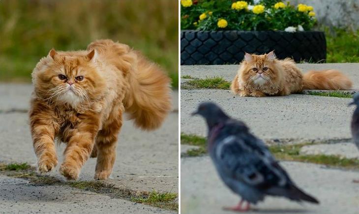 Драматичная история кота Барсика, который не смог