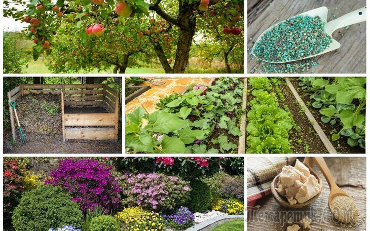 Какие удобрения вносить осенью, как применять удобрения