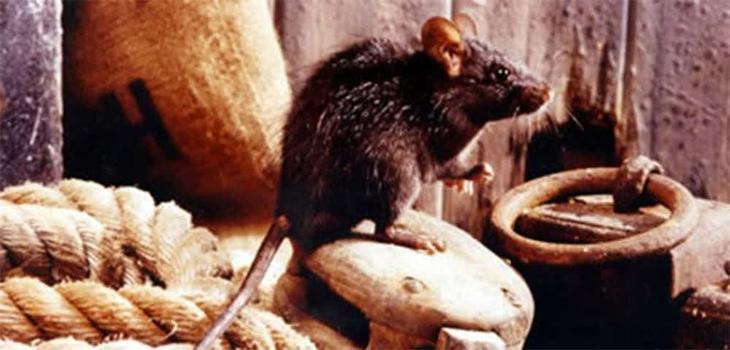 12. Мятеж, крысы, жестокие моря: непростое плавание Первого Флота австралия, история, колонизация, факт