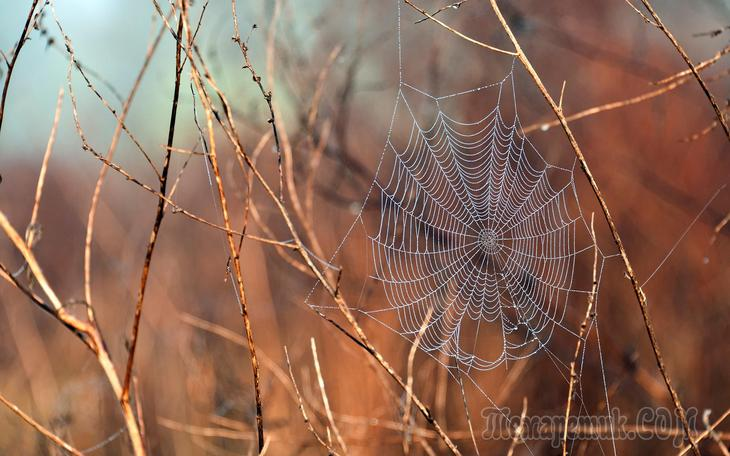 Осень-жизнь  (Стих)