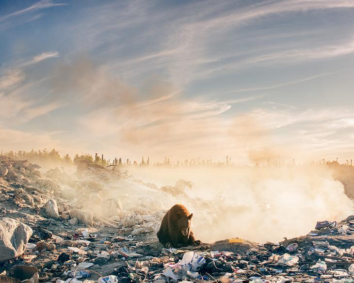 Фотограф Трой Мот, очарованный дикой природой