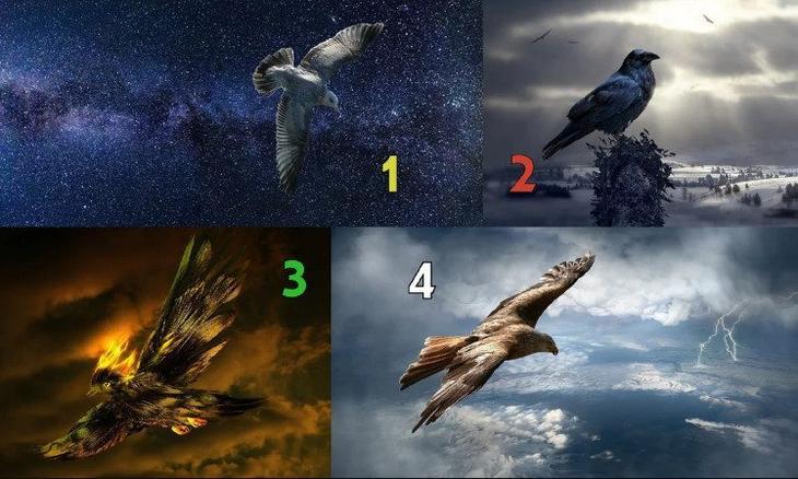 Тест - гадание: выберите птицу и узнайте, чего ждать от предстоящего месяца!