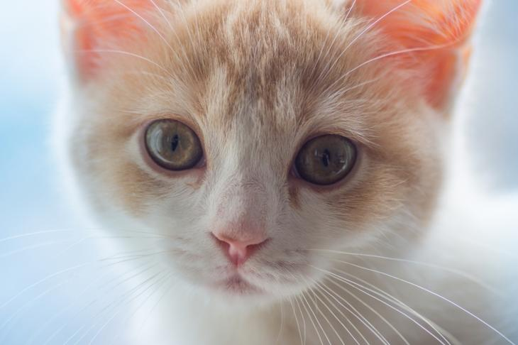 Кошки, Ханна, Дейзи, фотограф, Бен Тород, Ben Torode